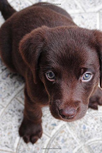 Download Beautiful Chocolate Labrador Retriever Dog Journal: 150 Page Lined Notebook/Diary ebook