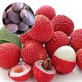 Wintefei 10Pcs Lychee Litchi Delicious Sweet Seasonal Fruit Tree Seeds Home Garden Plant