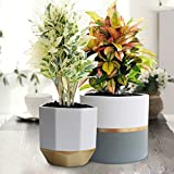 White Ceramic Flower Pot Garden Planters 6.5'' Pack 2 Indoor, Plant Containers with Gold and Grey Detailing