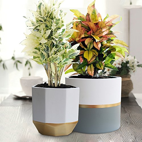White Ceramic Flower Pot Garden Planters 6.5'' Pack 2 Indoor, Plant Containers with Gold and Grey Detailing by EXQUIS HOME