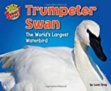 img - for Trumpeter Swan: The World s Largest Water Bird (Even More Supersized!) book / textbook / text book