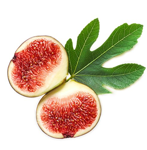Ge Neri Italian Fig Ficus Carica Live Plant