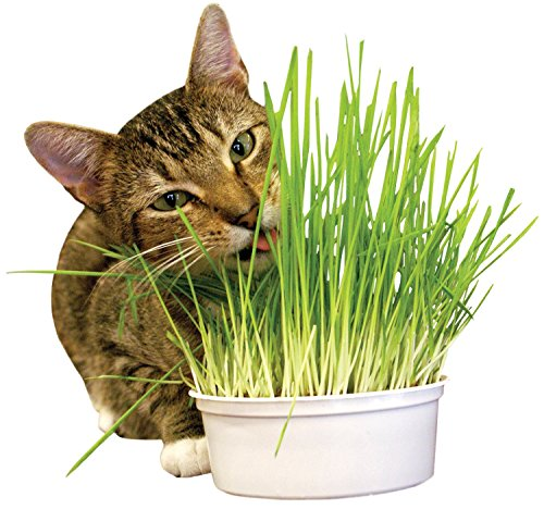 Imperial Cat (Imperial Cat Easy Grow Oat Grass Kit)