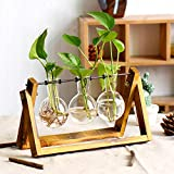 XXXFLOWER Plant Terrarium with Wooden Stand, Air