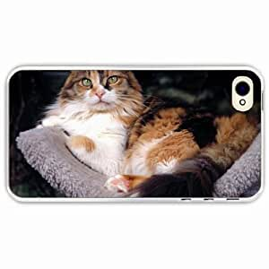 iPhone 4 4S Black Hardshell Case furry lying Transparent Desin Images Protector Back Cover