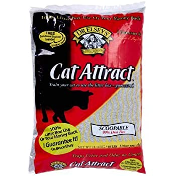 Amazon Com Precious Cat Cat Attract Problem Cat Training