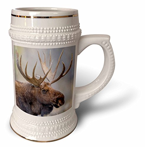 3dRose Danita Delimont - Moose - USA, Wyoming, Grand Teton NP, bull moose poses for a portrait. - 22oz Stein Mug (stn_260628_1) - Moose Portrait