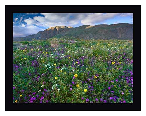 Wildflowers Carpeting The Ground Beneath Coyote Peak, Anza-Borrego Desert, California by Tim Fitzharris - 18