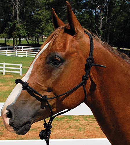 Mustang Knotted Rope Training Halter Black