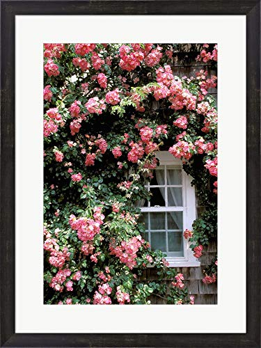 Nantucket Floral Picture Frame - Massachusetts, Nantucket Island, Roses and Home by Walter Bibikow/Danita Delimont Framed Art Print Wall Picture, Espresso Brown Frame, 22 x 29 inches