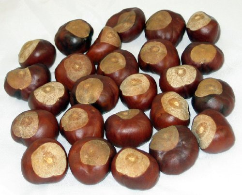 - Horse Chestnuts - Quarter Size - Twenty-Five Nuts