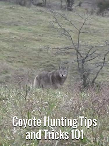 Coyote Hunting Tips and Tricks 101