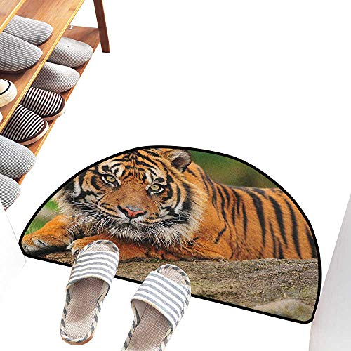 (Axbkl Washable Doormat Tiger Noble Beast Crouching on a Rock Sumatrian Large Cat Beautiful Nature Photography Super Absorbent mud W36 xL24 Multicolor)