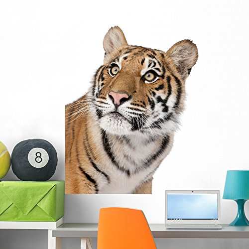 - Wallmonkeys Close-up Portrait Bengal Tiger Wall Decal Peel and Stick Graphic (36 in H x 26 in W) WM138528