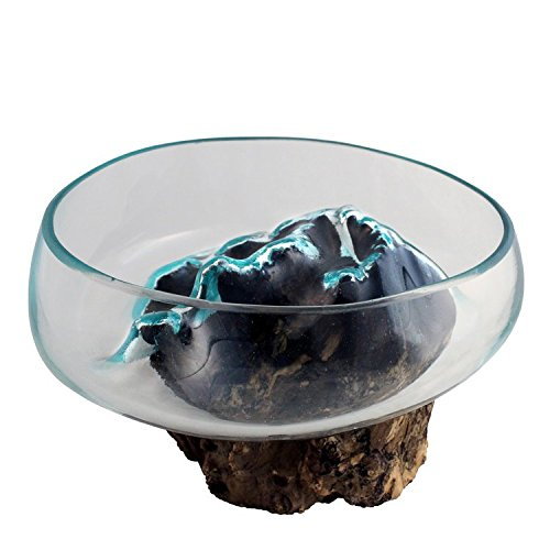 "Medium Hand Blown Molten Glass and Wood Root Sculptured Succulent Bowl Terrarium (9.5""x9.5"") by In the Garden and More"