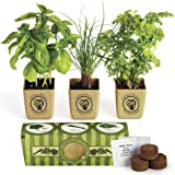 Organic Three Herb Garden Starter Kit - Sweet Basil, Chives and Parsley Plants