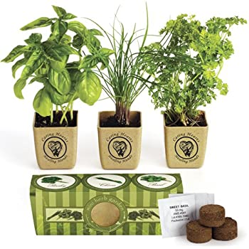 Organic Three Herb Garden Starter Kit   Sweet Basil, Chives And Parsley  Plants