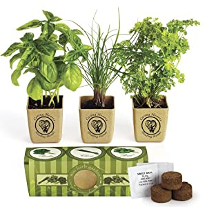 Delightful Organic Three Herb Garden Starter Kit   Sweet Basil, Chives And Parsley  Plants