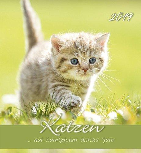 Katzen 2019 - Postkartenkalender