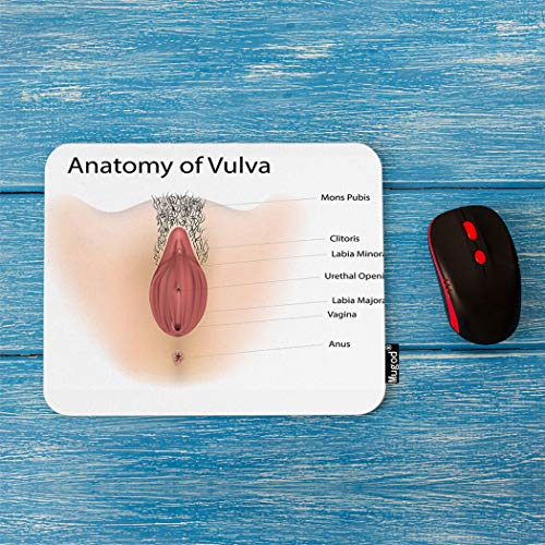 Mugod Anatomy of Vulva Mouse Pad Vagina Medical Illustration Decor Gaming Mouse Pad Rectangle Non-Slip Rubber Mousepad for Computers Laptop 7.9x9.5 Inches ()