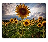 Sunflowers Flower Fields Nature Cloudy Sky Mouse Pads Customized Made to Order Support Ready 9 7/8 Inch (250mm) X 7 7/8 Inch (200mm) X 1/16 Inch (2mm) High Quality Eco Friendly Cloth with Neoprene Rubber Luxlady Mouse Pad Desktop Mousepad Laptop Mousepads Comfortable Computer Mouse Mat Cute Gaming Mouse pad