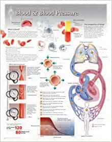 Blood & Blood Pressure Wall Chart: 8160 (Physiology