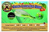 Nature's Good Guys Green Lacewing 1,000 Eggs - Slow