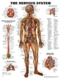 The Nervous System Anatomical Chart, Anatomical Chart Company Staff, 1587796902
