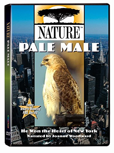Nature - Pale Male