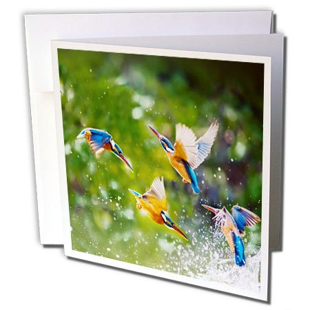 Many Wildlife Animals (3dRose Sven Herkenrath Animal - Many Exotic Birds in the Free Nature Wildlife Jungle Animal - 1 Greeting Card with envelope (gc_254229_5))