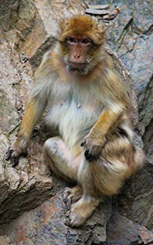 Notebook: Monkey macaque barbary Gibraltar primate mammal ape primate new world monkey old