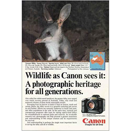 - RelicPaper 1986 Canon T90 Camera: Greater Bilby, Canon Print Ad