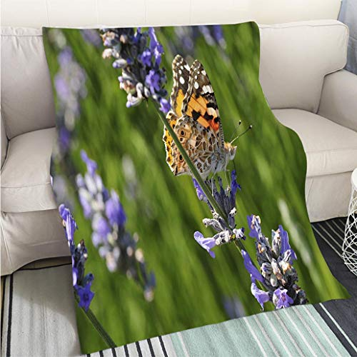 BEICICI Art Design Photos Cool Quilt Painted Lady Butterfly UK Fun Design All-Season Blanket Bed or Couch - Painted Lady Butterfly Pictures