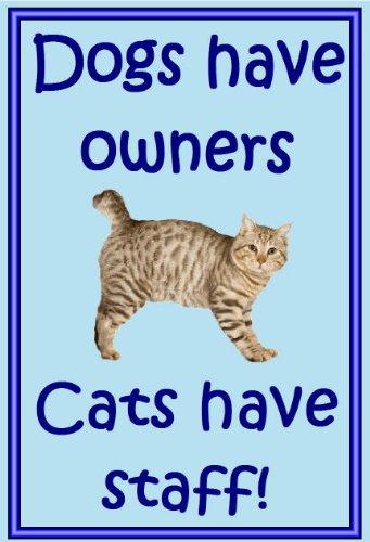 Bobtail americano gato - novedad gato imanes de nevera - los perros tienen propietarios - Regalos para dueños de gatos: Amazon.es: Hogar