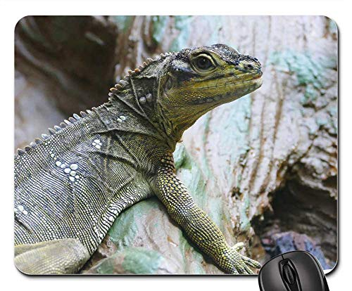 Mouse Pad - Sailfin Lizard Reptile Lizard Nature Animal