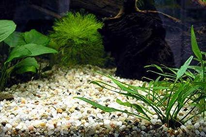 TM Aquatix Aquarium Gravel Natural White Fish Tank Sand Plant Substrate LIGHT SILICA 3-5mm 2kg
