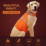 Dog Jacket High Visibility Safety Reflective Dog Vest for Small Medium Large Dogs (Large, Orange)
