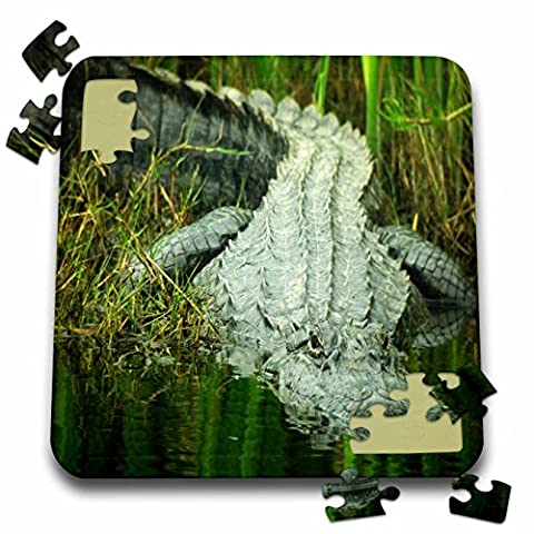 Florene Animals - Grow them Big Here In Florida An Alligator - 10x10 Inch Puzzle (pzl_62370_2) - Alligator Puzzle