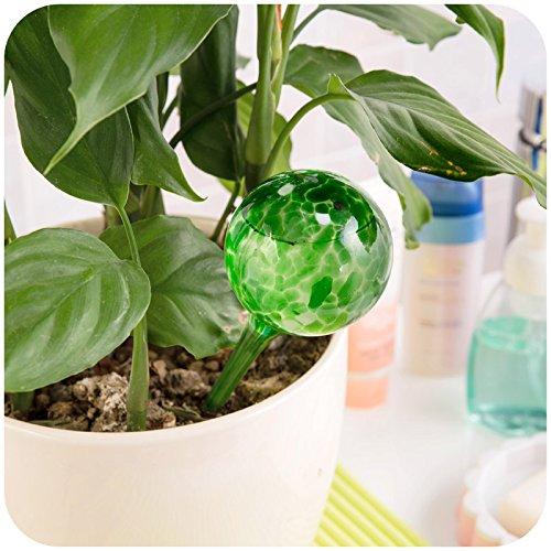 dealglad Lot de 2/globes darrosage automatique des plantes Boule en verre fleurs dirrigation outil 15/x 15/x 6/cm