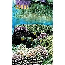 Coral: Beautiful