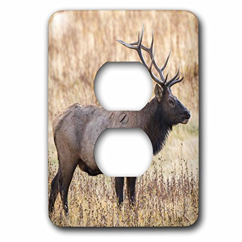(3dRose lsp_279839_6 Bull Elk, Yellowstone National Park, Wyoming Plug Outlet Cover Mixed)