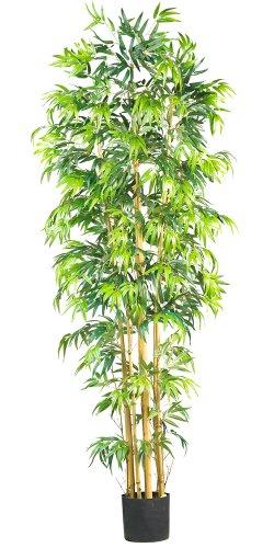 (Nearly Natural 5215 Bambusa Bamboo Silk Tree, 7-Feet, Green )