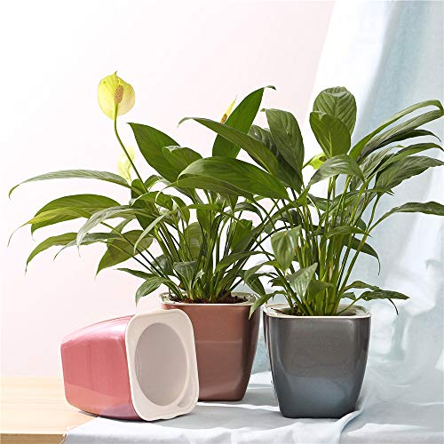 FENGZHITAO Self Watering Planter, African Violet Pots,Lazy Flower Pot,Automatic-Watering Planter Flower Pot for Succulents, Herb, African Violets, All House Plants(3 Packs Colourful - House African Violet Plant