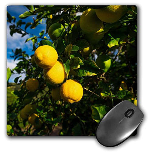 3Drose Danita Delimont   Food   Lemon Orchard In Wheeler Canyon  Ventura County  California  Usa   Mousepad  Mp 278649 1