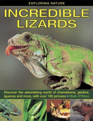 Read Online By Mark O'Shea Exploring Nature: Incredible Lizards: Discover the Astonishing World of Chameleons, Geckos, Iguanas [Hardcover] pdf