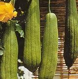 Luffa Bathroom Sponge 10 Seeds - Gourds!