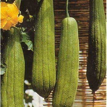 Amazon Com Luffa Bathroom Sponge 10 Seeds Gourds