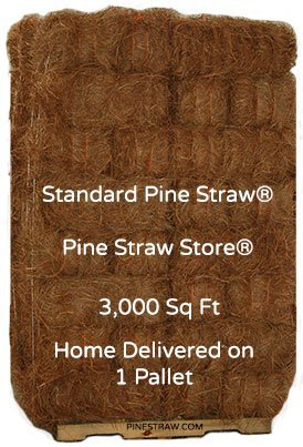 Pine Straw Mulch - Pine Needles Mulch - 3000 Square Feet by Pine Straw (Image #2)