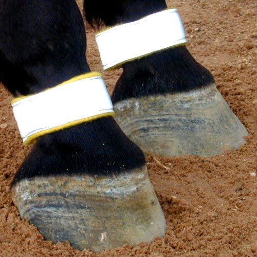 Reflective Leg Bands for (Reflective Horse Tack)