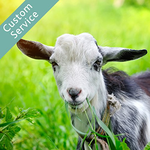 hire-a-goat-grazer